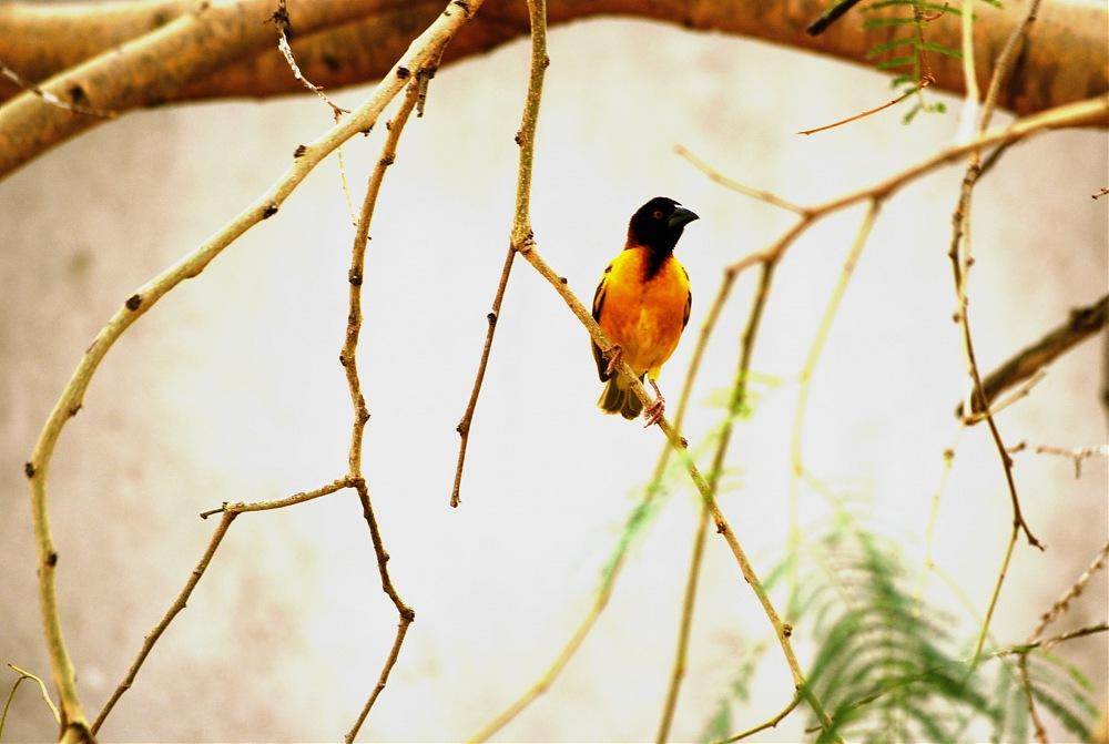 photoblog image Lonely