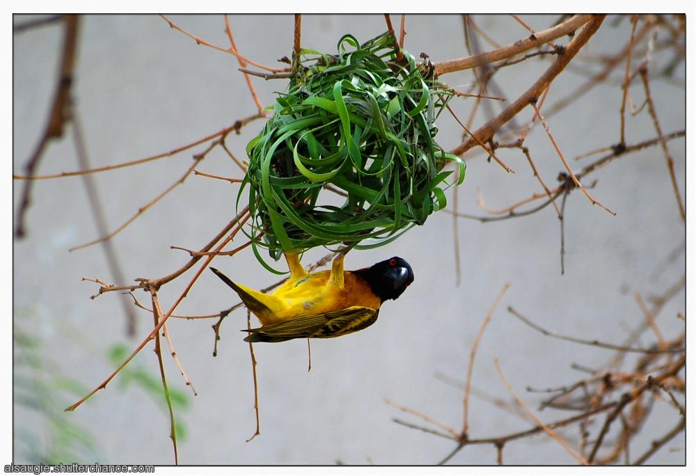 photoblog image Stop bugging me