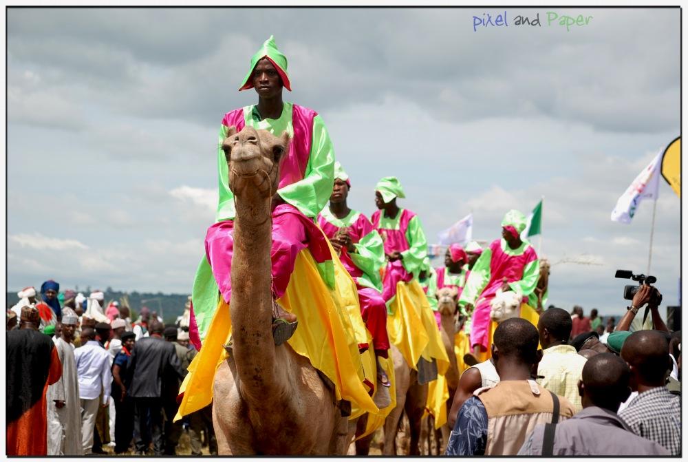 photoblog image Camels: Durbar, Niger state, Nigeria