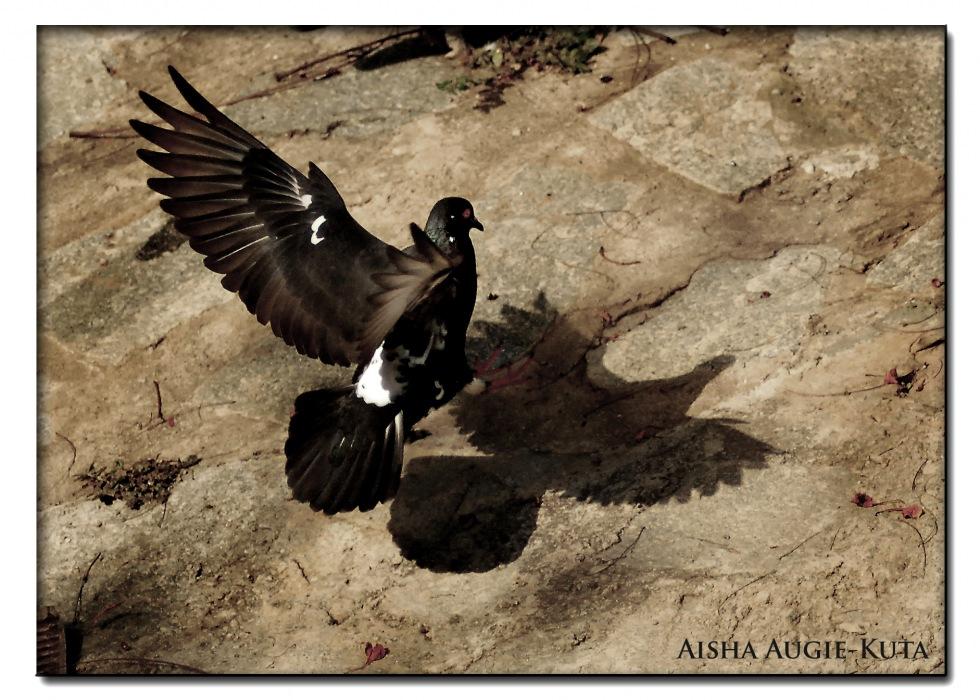photoblog image Great landing
