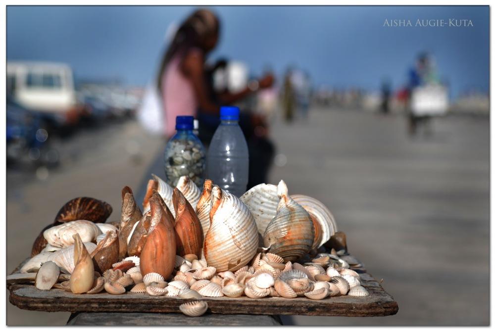 photoblog image Shells of glory