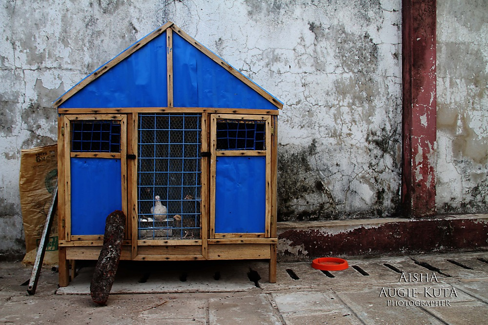 photoblog image Poultry or Pethouse?