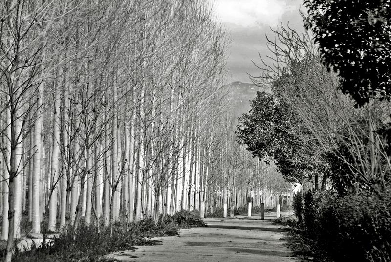 photoblog image Contrastes de invierno