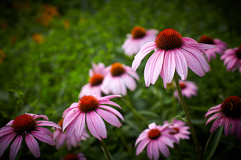 photoblog image Flowers in Central Park NY