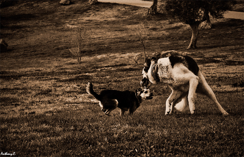 photoblog image Playing