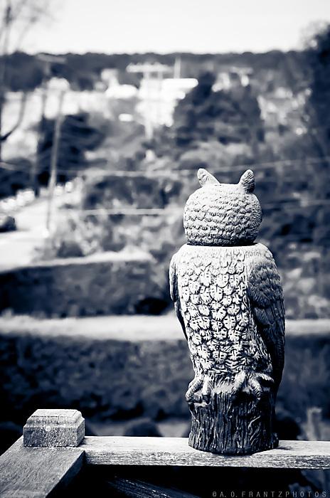 photoblog image Bird