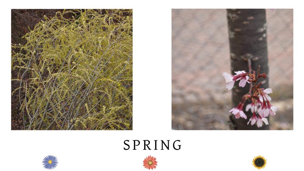 photoblog image Spring