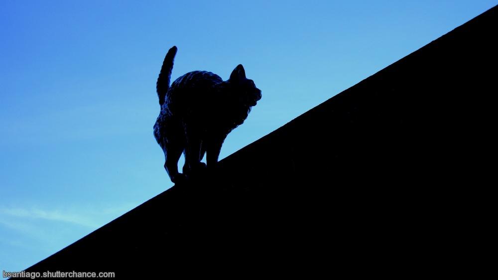 photoblog image Rafael´s Bordalo ceramic  Cat