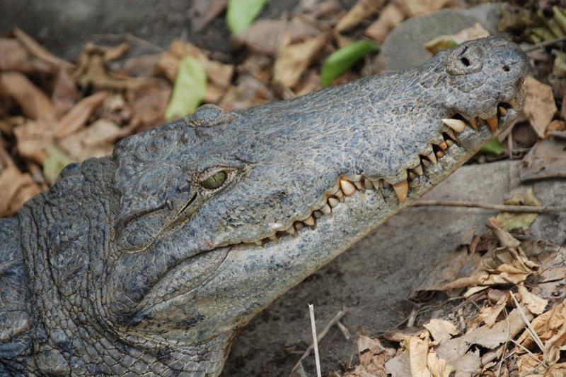 photoblog image Crocodile Island, Cape coast Ghana