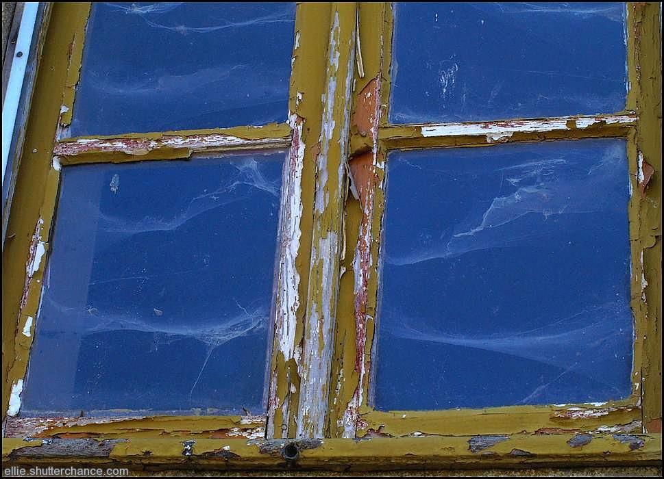 photoblog image One cobweb or two?