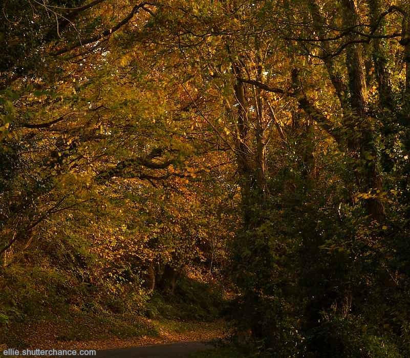 photoblog image Forest autumn