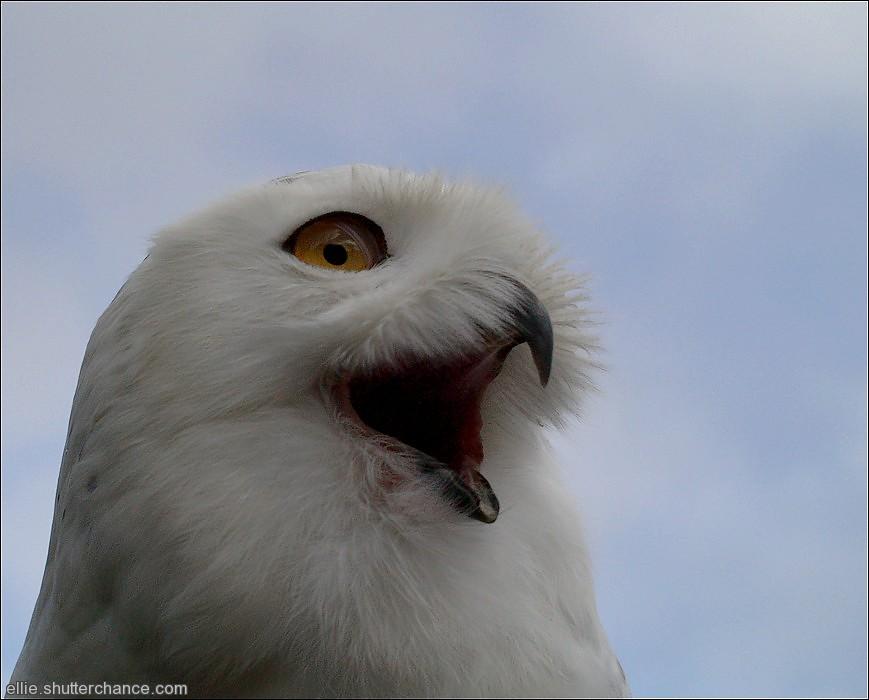 photoblog image Owl week