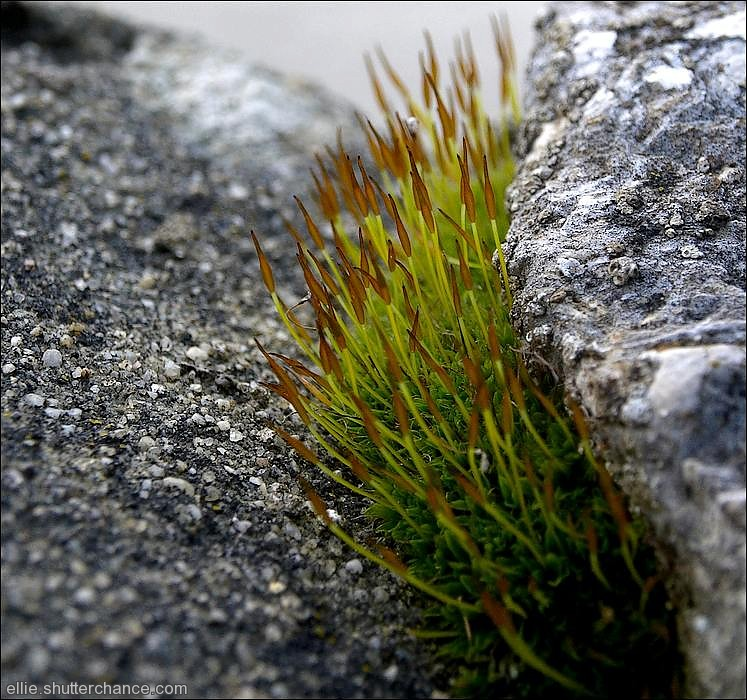 photoblog image Moss