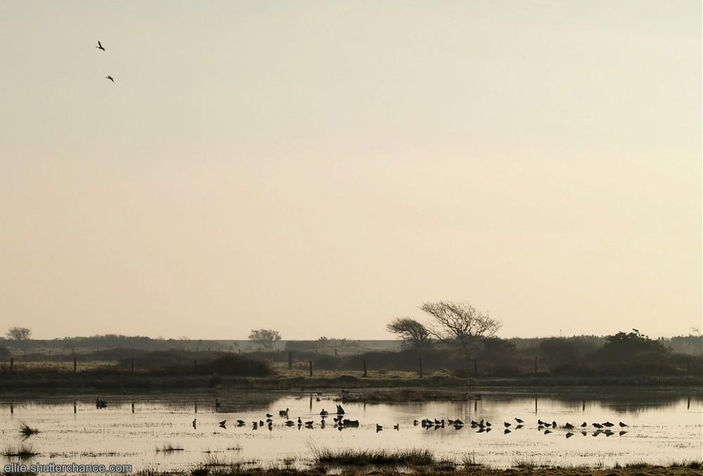photoblog image Morning at the Marshes
