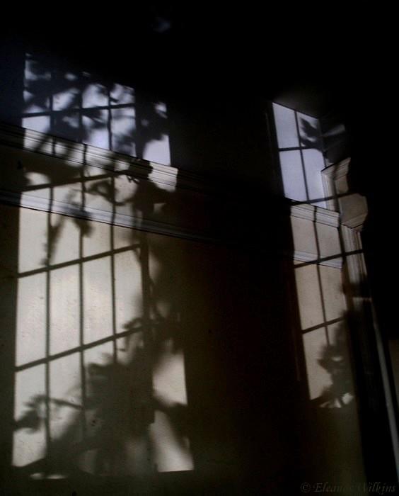 photoblog image Through the window