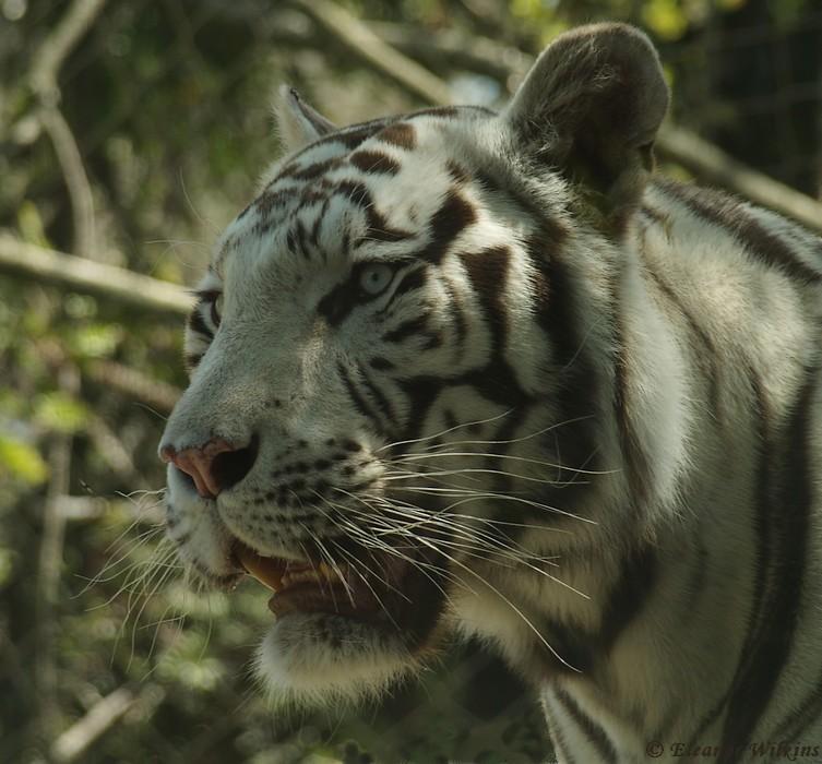 photoblog image Lisbon Zoo