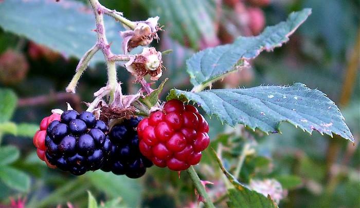 photoblog image Forest fruits