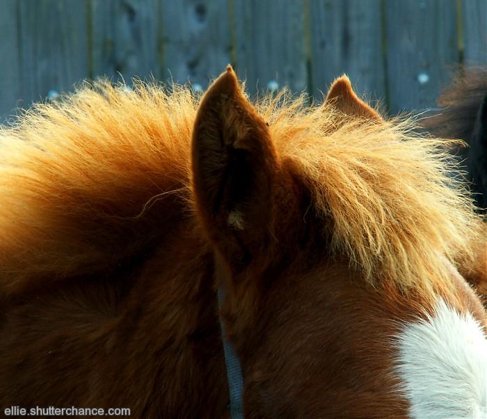 photoblog image Foal's mane