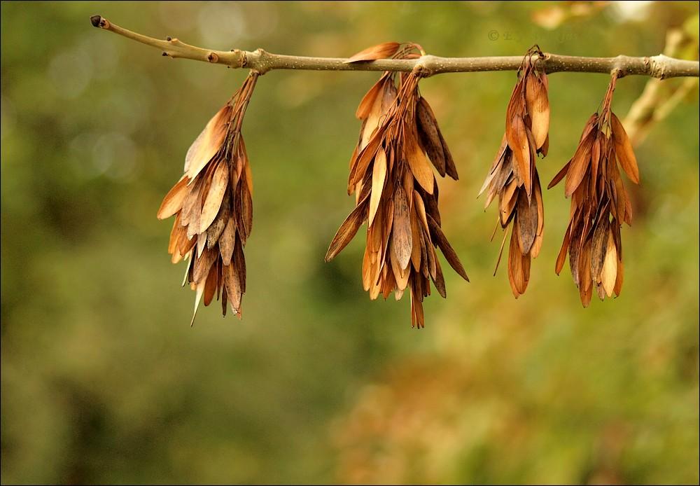 photoblog image Autumn