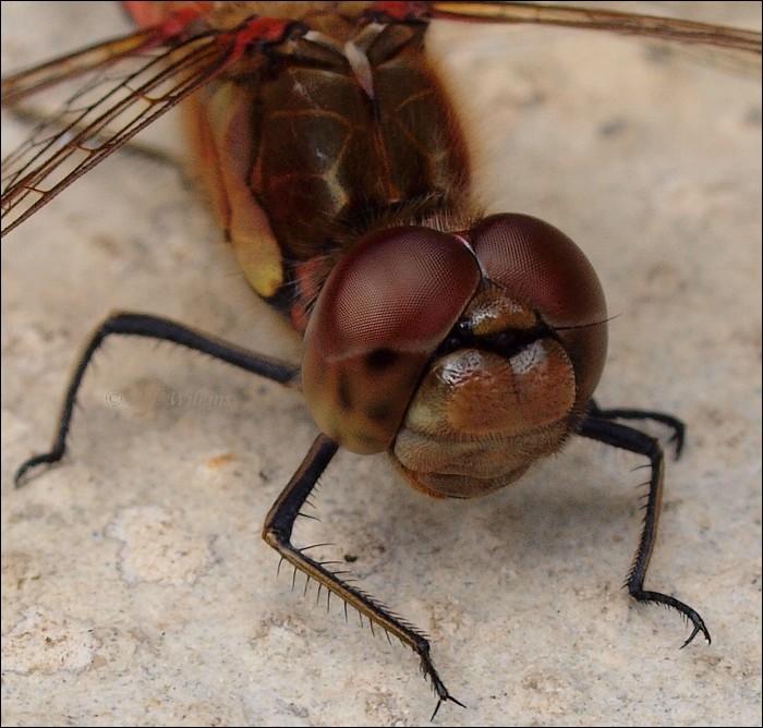 photoblog image Dragonfly