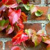 red leaves and red brick