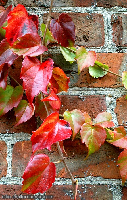 photoblog image red leaves and red brick