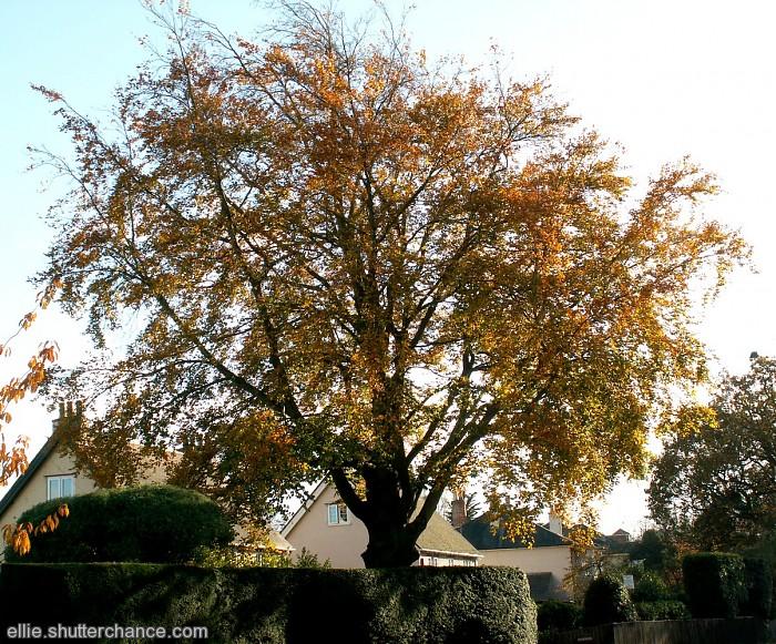 photoblog image Memories of Autumn