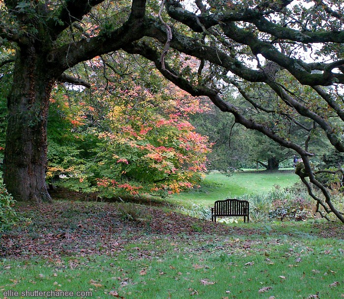 photoblog image Exbury bench