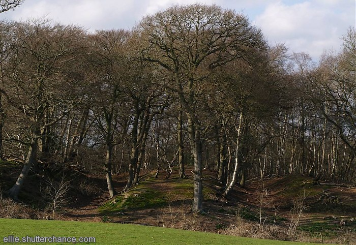photoblog image Buckland Rings; an Iron Age Hill Fort