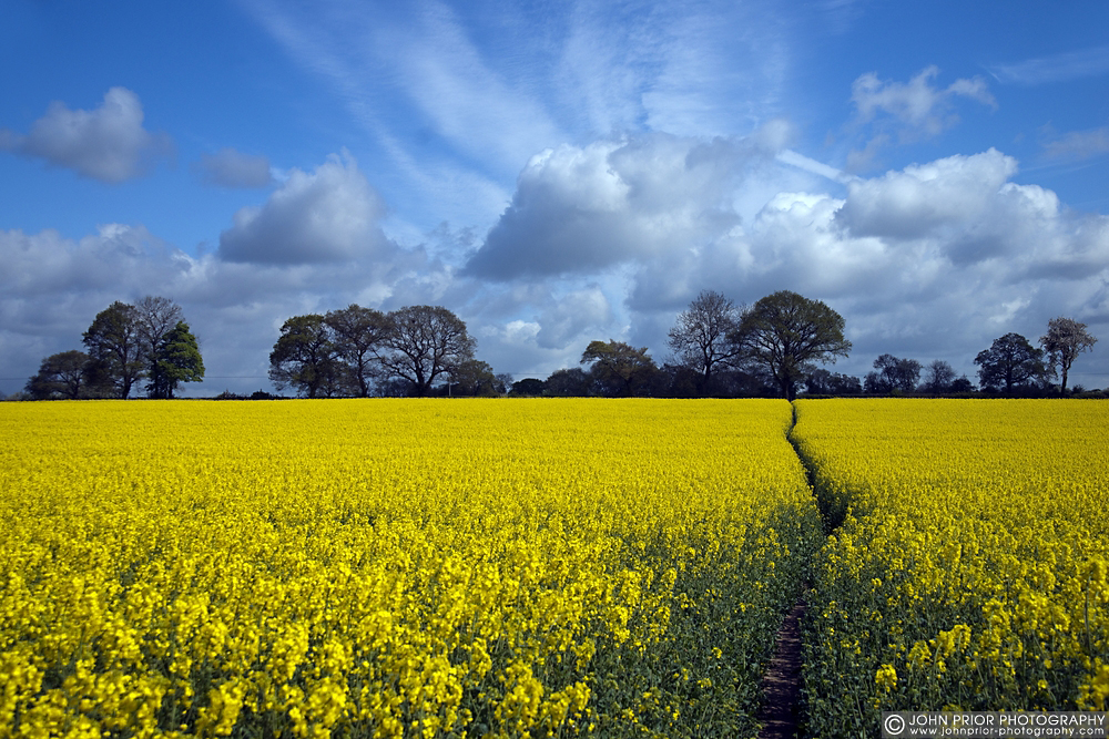 photoblog image Yellow landscape