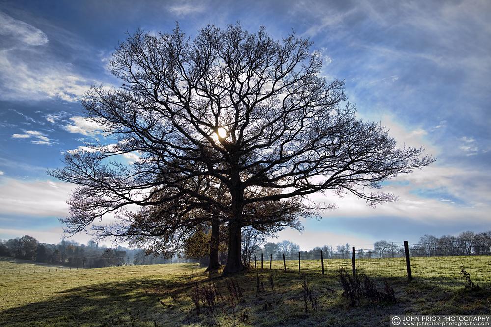 photoblog image Morning trees