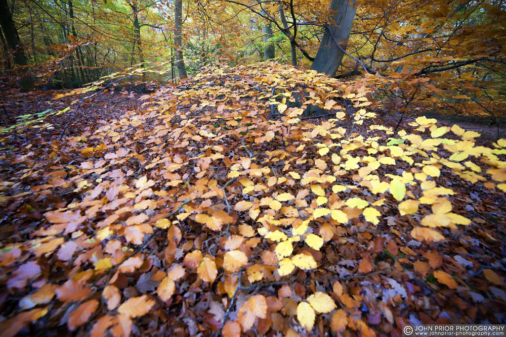 photoblog image Colour spread