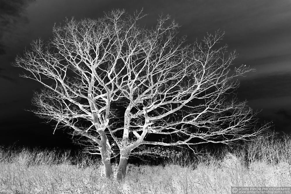 photoblog image Night tree