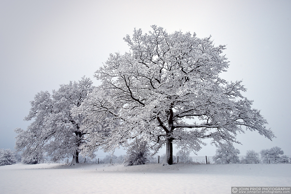 photoblog image Winter trees