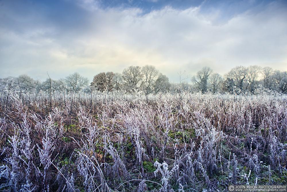 photoblog image Frosty