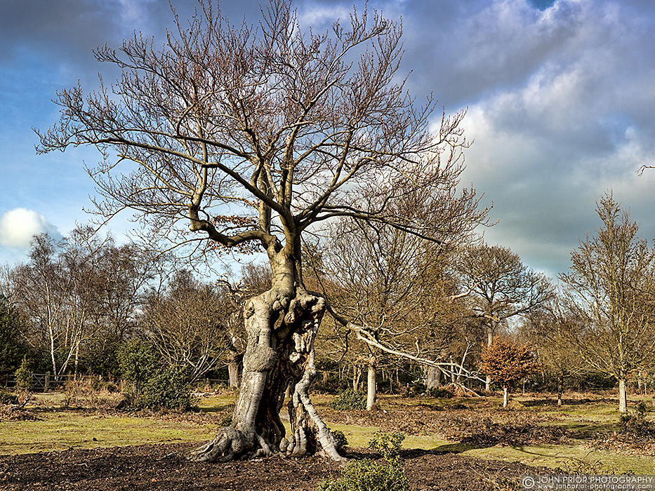 photoblog image Burnham Beeches I