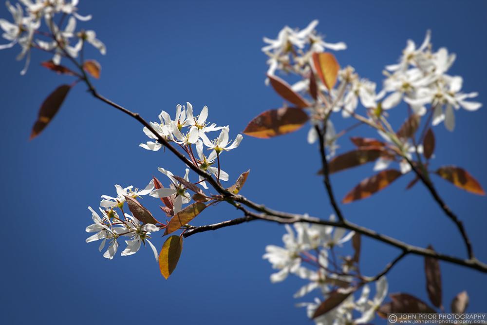 photoblog image Spring blossom