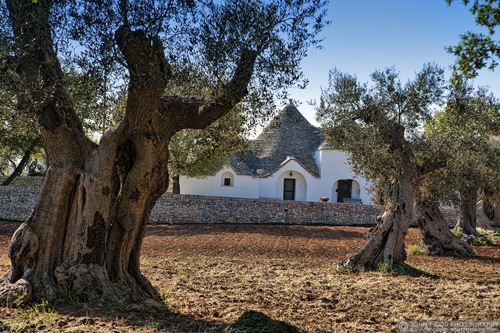 photoblog image Old Olive trees