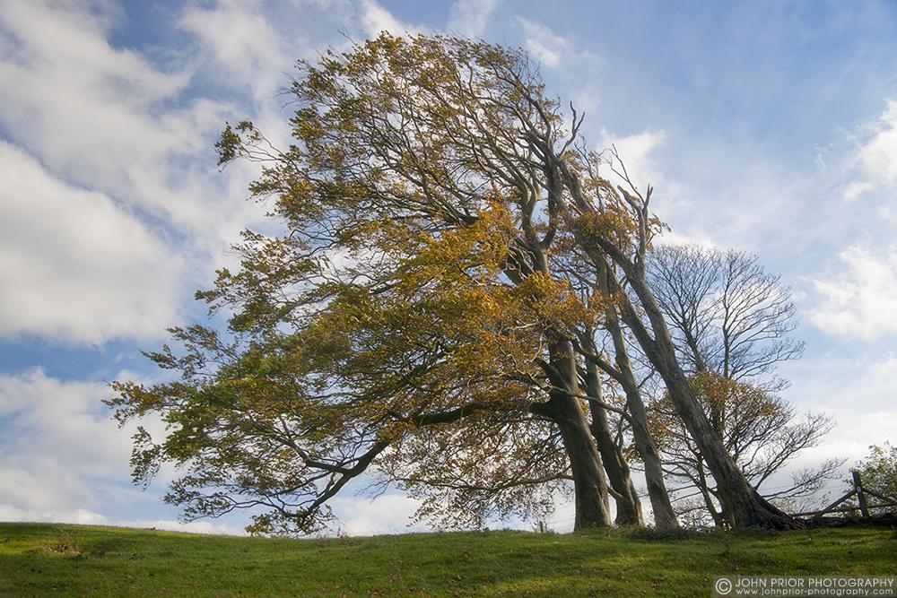 photoblog image Wind swept trees.