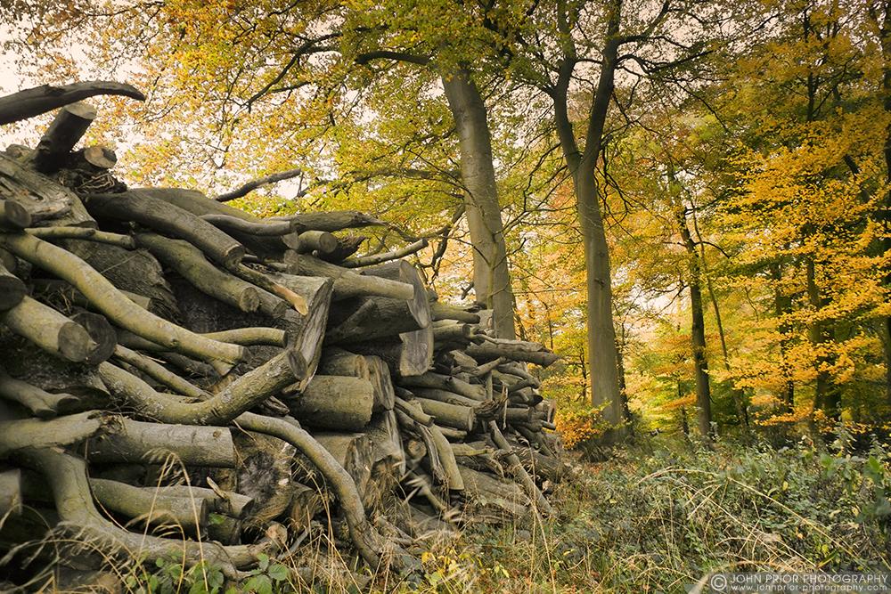 photoblog image Wood pile