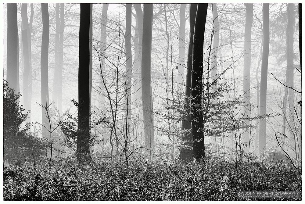 photoblog image Foggy day II