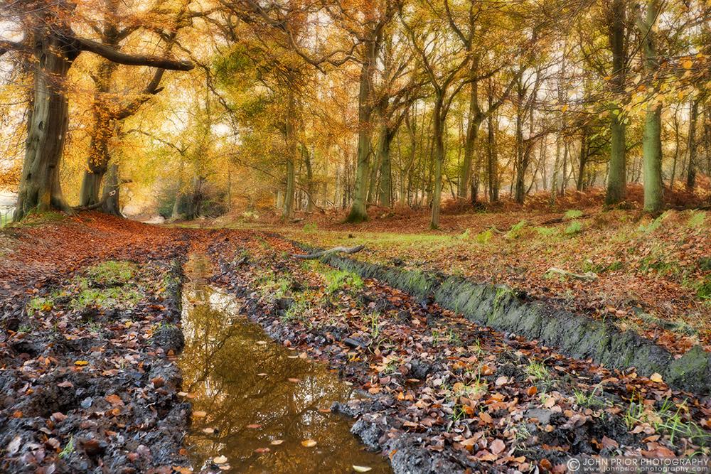 photoblog image Ashridge track