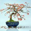 Confused bonsai