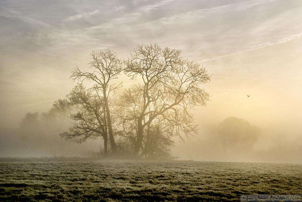 photoblog image Frost and fog