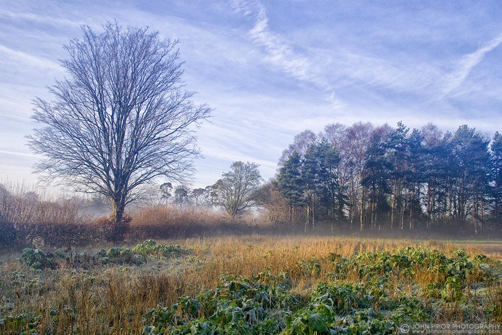 photoblog image Winter landscape