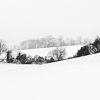 Sunday snow III