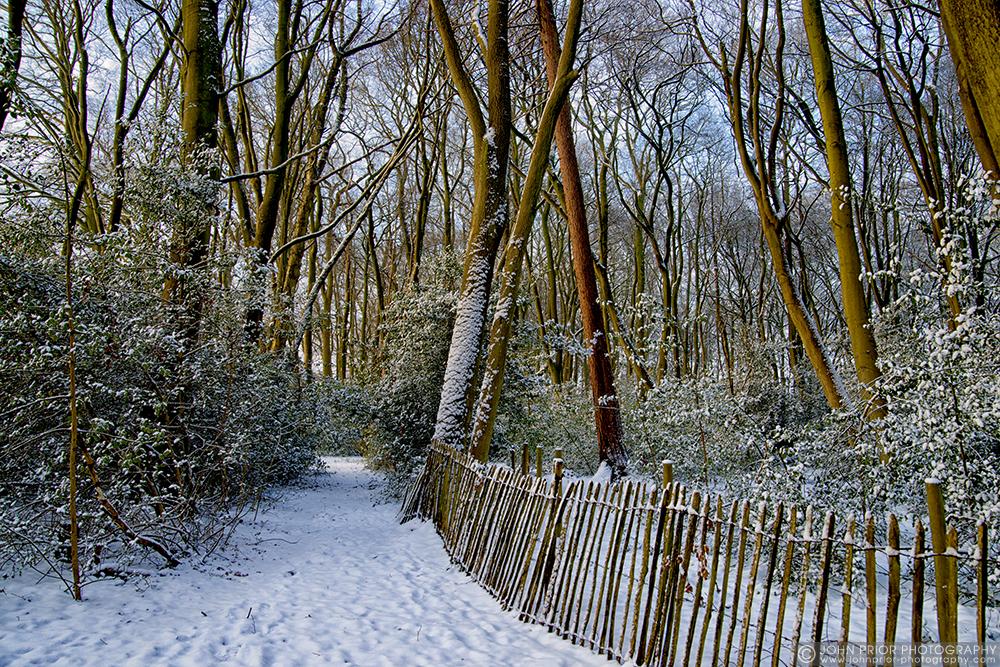 photoblog image To the woods