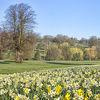 Daffodil Park