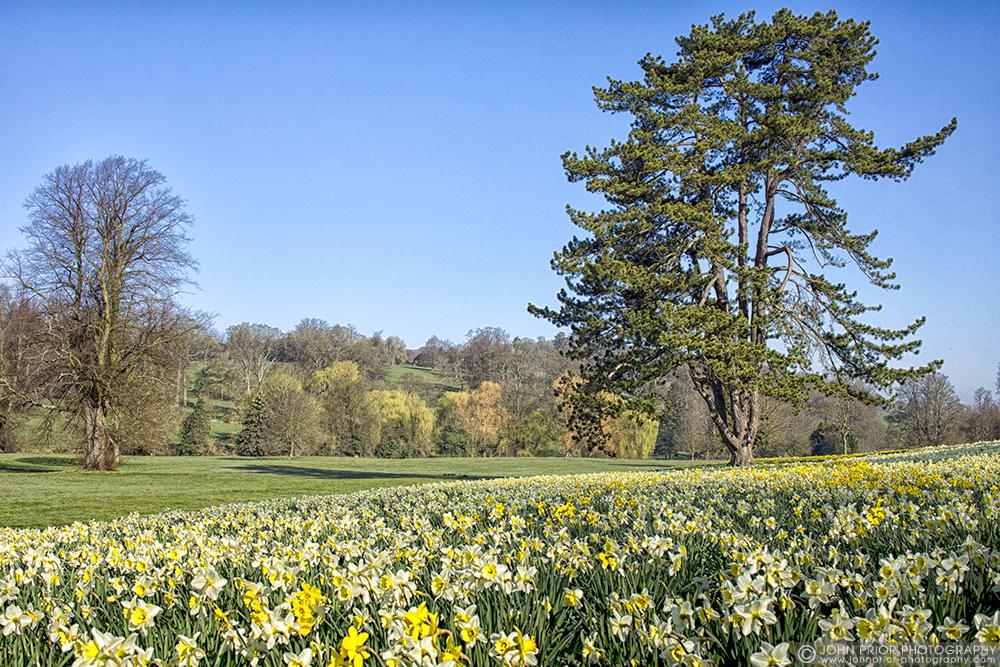 photoblog image Daffodil Park