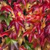 Autumn palette I